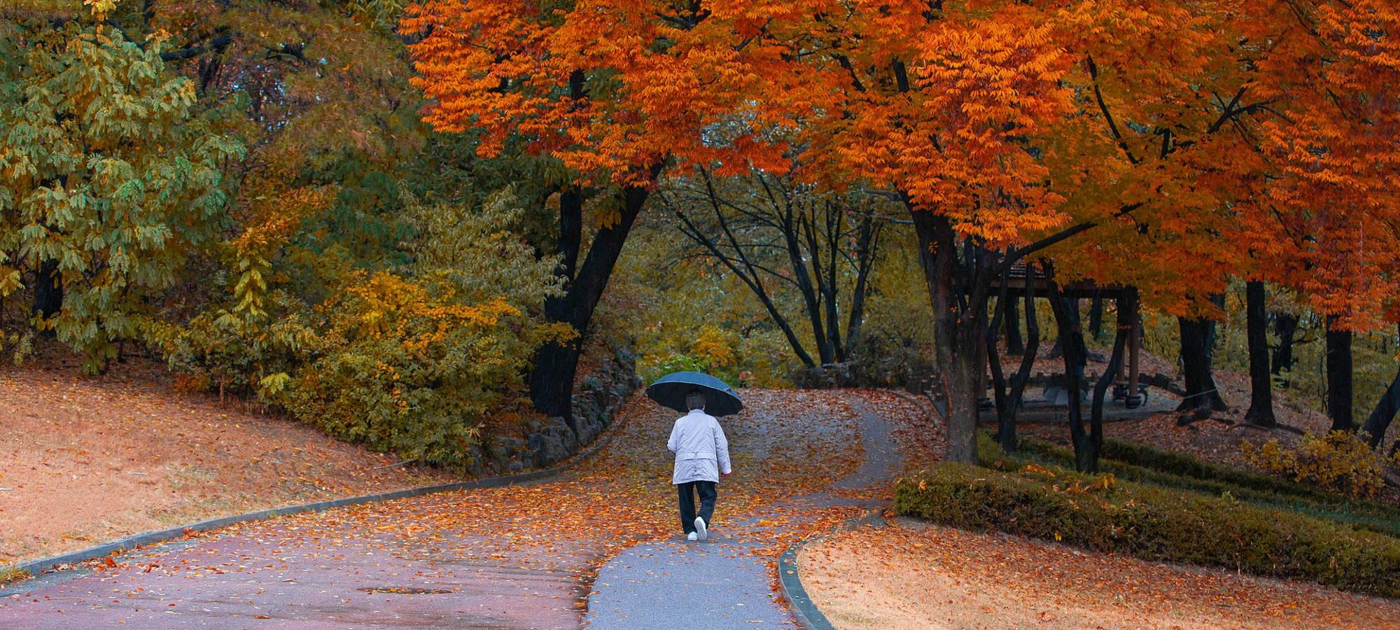 Frau mit Schirm spaziert unter herbstroten Baaeumen